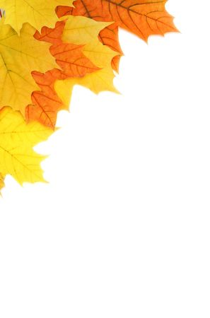 Maple leaves in the corner isolated on white background Standard-Bild
