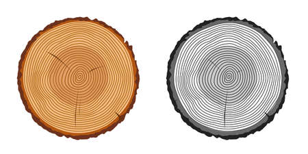 Tree trunk rings cut isolated close up vector cartoon illustration set, black and white and brown colorful wooden stump slice clipart image 일러스트