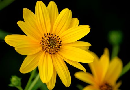 Yellow in the garden Stock Photo