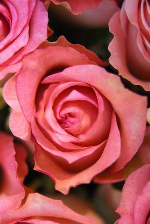 parfum: roses