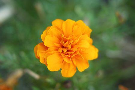 parfum: yellow