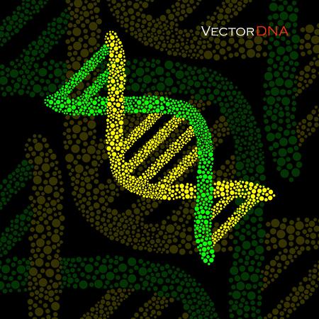 vector  molecular: Colorful DNA, molecular structure. Vector illustration. Illustration