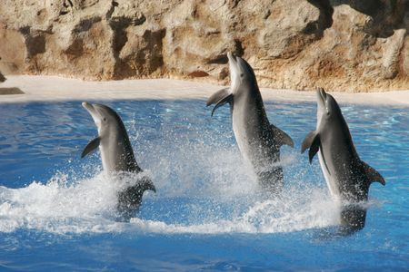 porpoise: Jumping dolphins Stock Photo