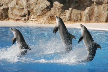dolphins: Jumping dolphins Stock Photo