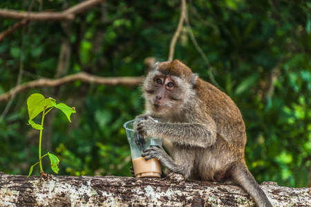 Small monkey drinking coffee from plastic glass