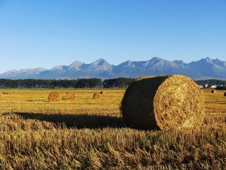 Sláma v poli, pšenice sklizně pod horami, balíky slámy Reklamní fotografie