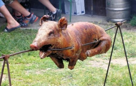 Roast a pig, barbeque pig   Reklamní fotografie