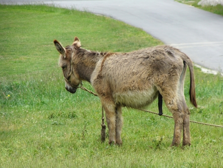brown donkey waiting for the owner in the meadow   Reklamní fotografie