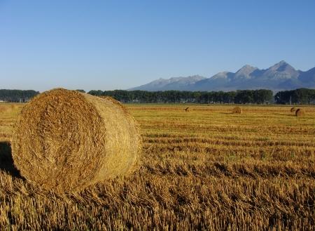 Balíky slámy na zemědělské půdě s modrou oblohou Reklamní fotografie