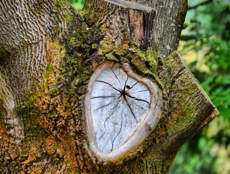 strom detail Reklamní fotografie