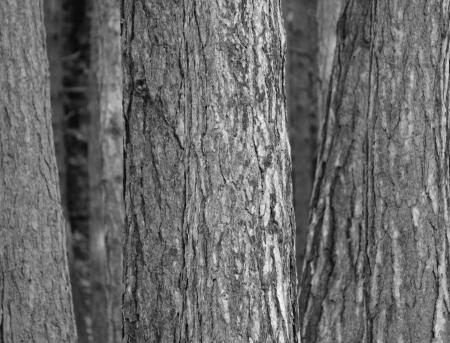 kmeny stromů Reklamní fotografie