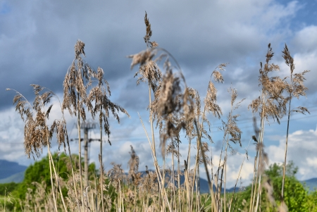 trávy na louce