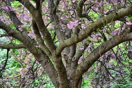 Blooming trees Reklamní fotografie