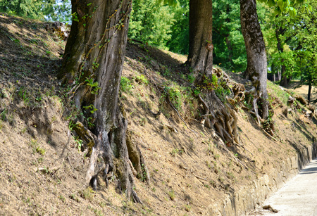 kořeny stromů Reklamní fotografie