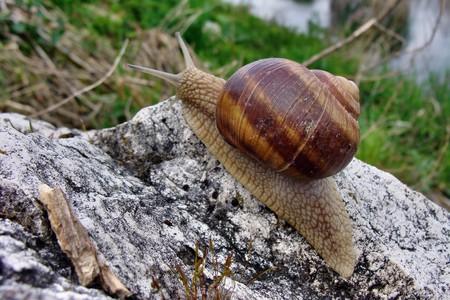 snail on stone Reklamní fotografie