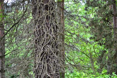 suchý strom Reklamní fotografie