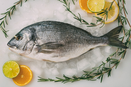 gilthead: Sea gilt-head bream fish on ice with rosemary, lemon, orange and lime. Fresh Orata, Dorade fish on kitchen table. Stock Photo