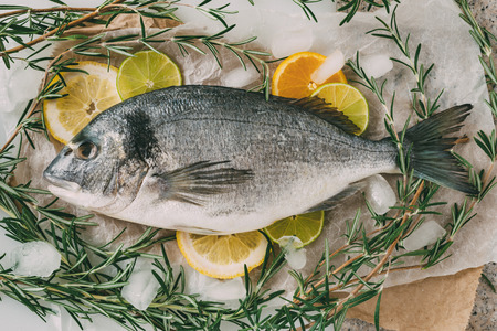 gilthead: Sea gilt-head bream fish on ice and baking sheet with rosemary, lemon, orange and lime. Fresh Orata, Dorade fish on kitchen table. Stock Photo
