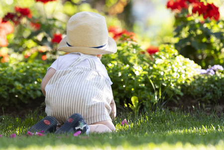 Baby boy crawls on the grass  watching flowers in the garden on beautiful spring day Standard-Bild