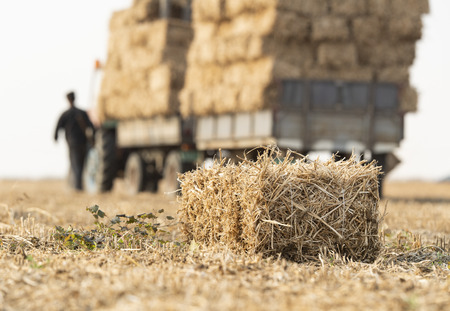 A young farmer is loading bales straw in a tractor trailer