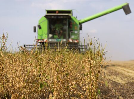 Harvesting of soybean field with combine 免版税图像