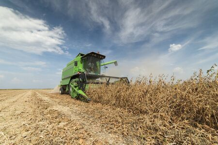 Harvesting of soybean field with combine Stok Fotoğraf