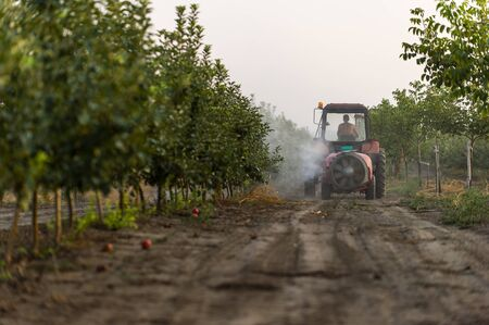 Spraying trees in fruit orchard against insect and deceases Stok Fotoğraf