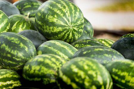 Many big fresh healthy sweet green watermelons