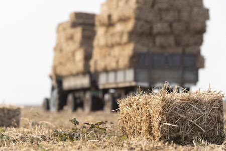 Bales straw in a tractor trailer