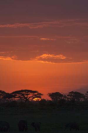 amboseli: Savanna nightlife. Amboseli, Kenya