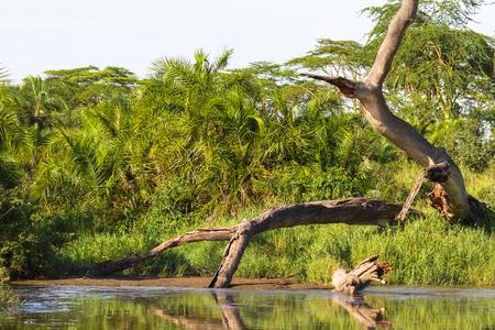 Landscape with dry tree. Serengeti, Tanzania