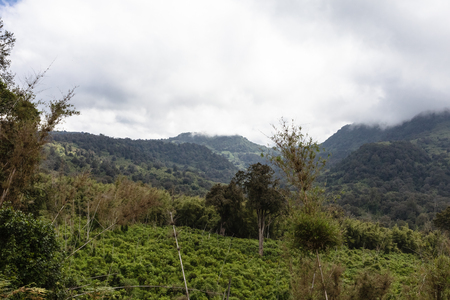 Landscape of Aderdare mountain. A blue sky and clouds over a bright green jungle. Kenya