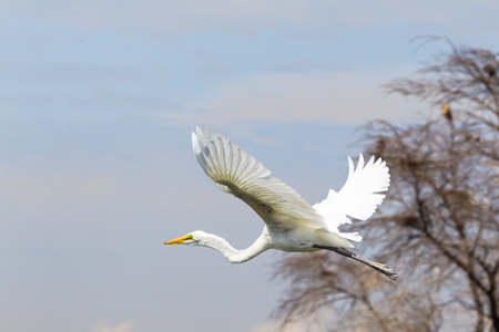 Heron takes off from the shore of the lake. Lake Baringo, Kenya Stock Photo