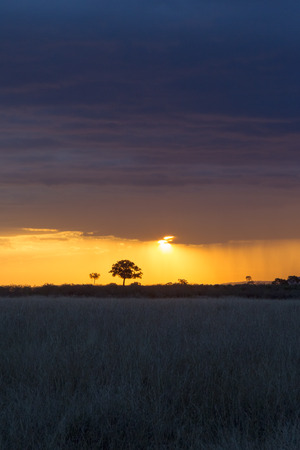The last rays of the sun in the savannah. Masai Mara, Kenya. Africa