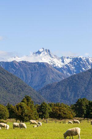 Southern Alps Views. Mount Cook and mount Tasman. South island new zealand Фото со стока