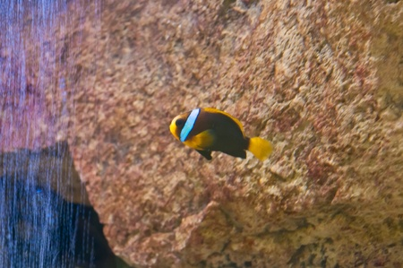 Exotic small fishes in an aquarium photo
