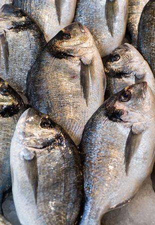 daurade: daurade fishes at the local market