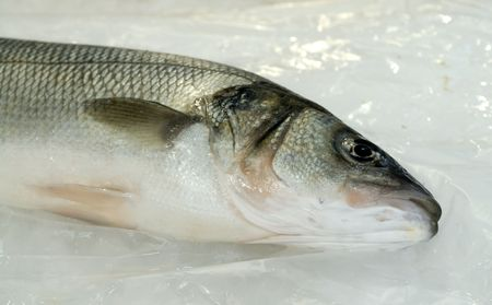 fishy: Seabass or bass-fish at the local market