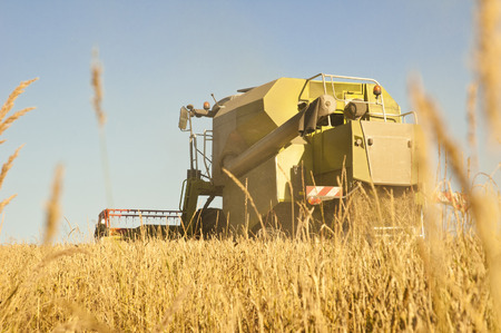 combine harvesting wheat in summer afternoon photo