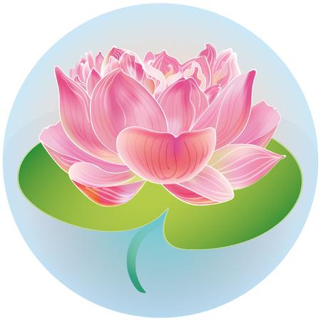 lotus lantern: lotus