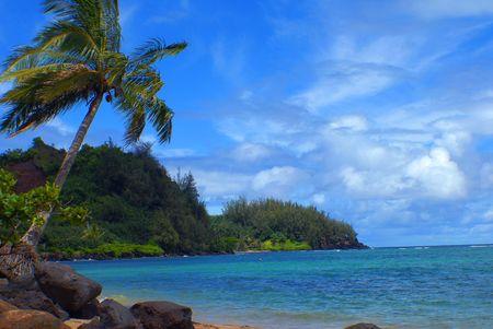 Hawaii. Palm Tree growing near the ocean. Beautiful sky.