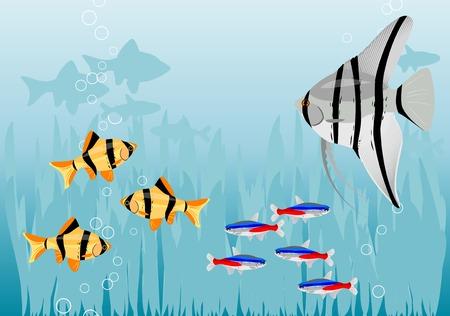 algen: Aquarium met kleur vissen. Stock Illustratie