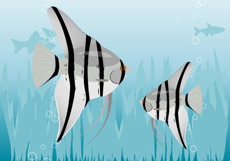 Aquarium with amazonas fishes. Stock Vector - 5792957