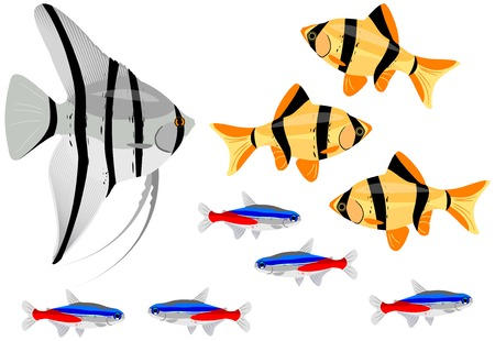 Various fishes separated on the white background. Vector