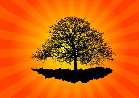 orange tree: Old tree levitate on the orange background.