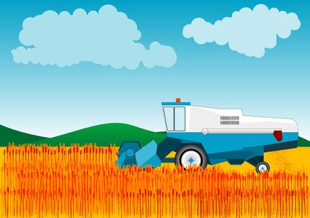 agriculture industry: Blue combine is cutting wheat. Stock Photo