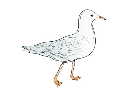 Isolated drawing bird. Vector