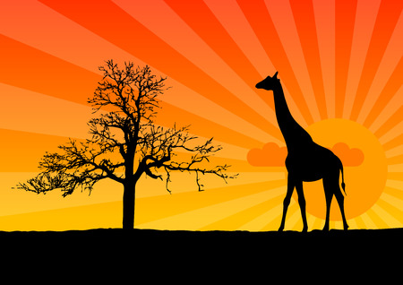 Black silhouette of girafee at the sunrise. Vector