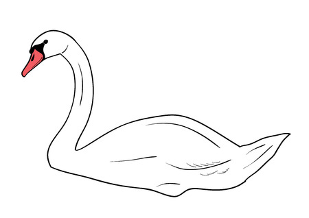 Simple swan isolated on the wite