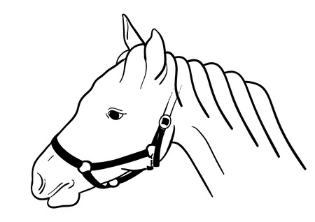 snaffle: Horse head isolated on the white. Illustration